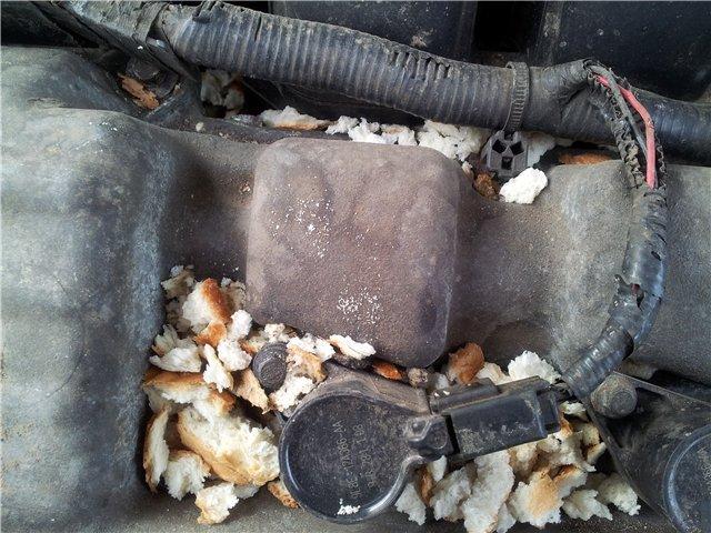 """Мыши могут собирать """"запасы"""" на зиму - не оставляйте в машине хлебобулочные изделия"""