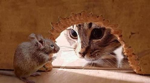 Мыши в стенах