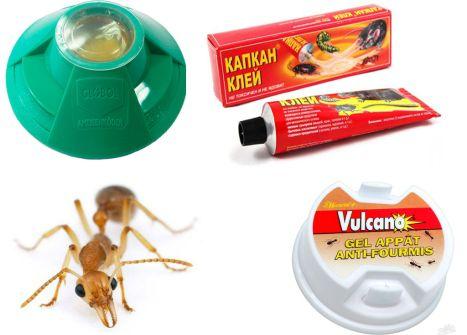 Ловушка Раптор для муравьев