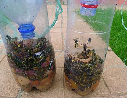 Используя приманки для ос, можно избавиться от вредных насекомых