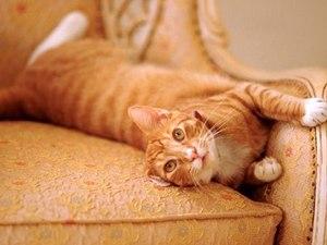 как избавиться от кошачьего запаха мочи на диване
