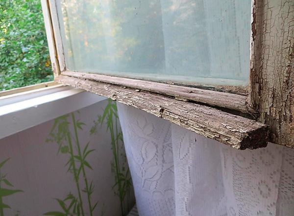 Клопы могут проникать в квартиру по наружной стене здания через щели в старых окнах.